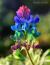 avatar_MaryTX