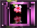Beauty Reflected